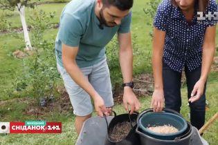 Як правильно посадити та обрізати кущі лохини – Сніданок на дачі