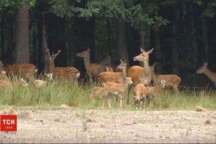 У Житомирській області приватне мисливське господарство незаконно утримує диких тварин