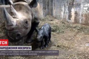 Редкое пополнение: в американском зоопарке родился малыш восточного черного носорога