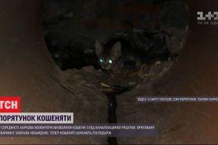 В центре Харькова волонтеры вызволили котенка из канализации