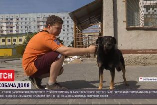 В Нетешине запретили подкармливать уличных собак и котов возле многоэтажек