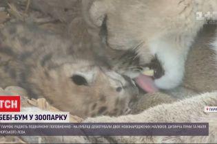 В Парижском зоопарке сразу двое новорожденных - пума и патагонский морской лев