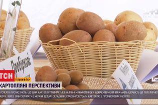 Через засуху фермери почнуть копати картоплю на два тижні пізніше