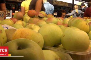 Фруктовая жатва: богатый ли урожай яблок и груш в этом году и сколько они стоят