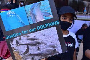 40 дельфинов погибли после утечки нефти у Маврикия: люди протестуют и требуют расследования