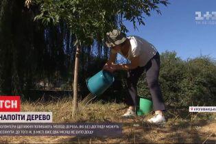 В Кропивницком волонтеры спасают молодые деревья от жары
