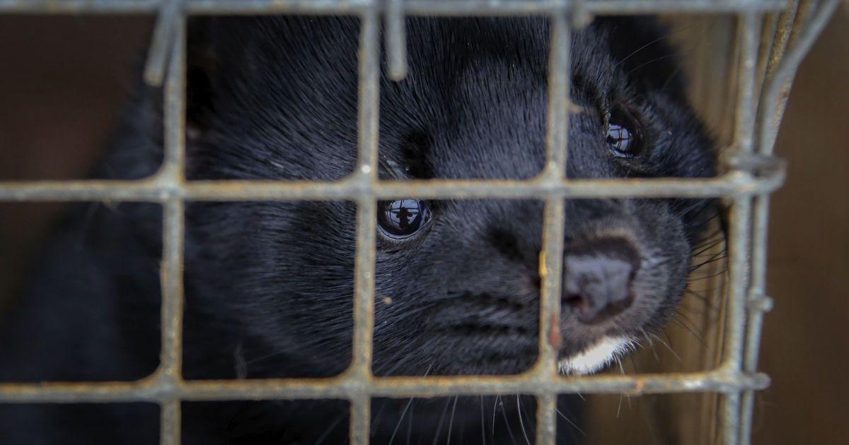 Верховна Рада не проголосувала за законопроєкт про експерименти над тваринами