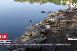 В реке Роставица за день подохли тысячи рыб