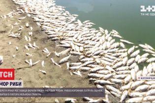В Житомирской области селяне обвиняют молокозавод в массовом море рыбы
