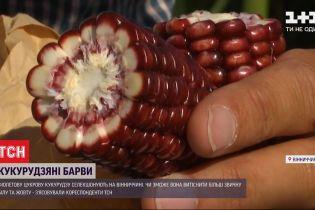 Новый сорт: на агрорынке появилась фиолетовая кукуруза
