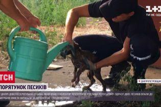 У Дніпропетровській області довелося рятувати відразу трьох цуценят