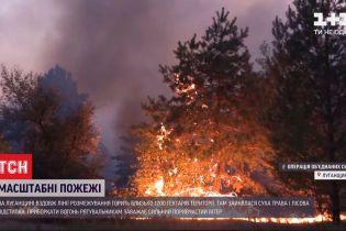 Навмисний підпал: у пресцентрі ООС заявили, що пожежі у Луганській області почалися не випадково