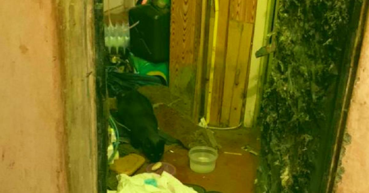 В Киеве в квартире, где умер дедушка, осталась серая кошка