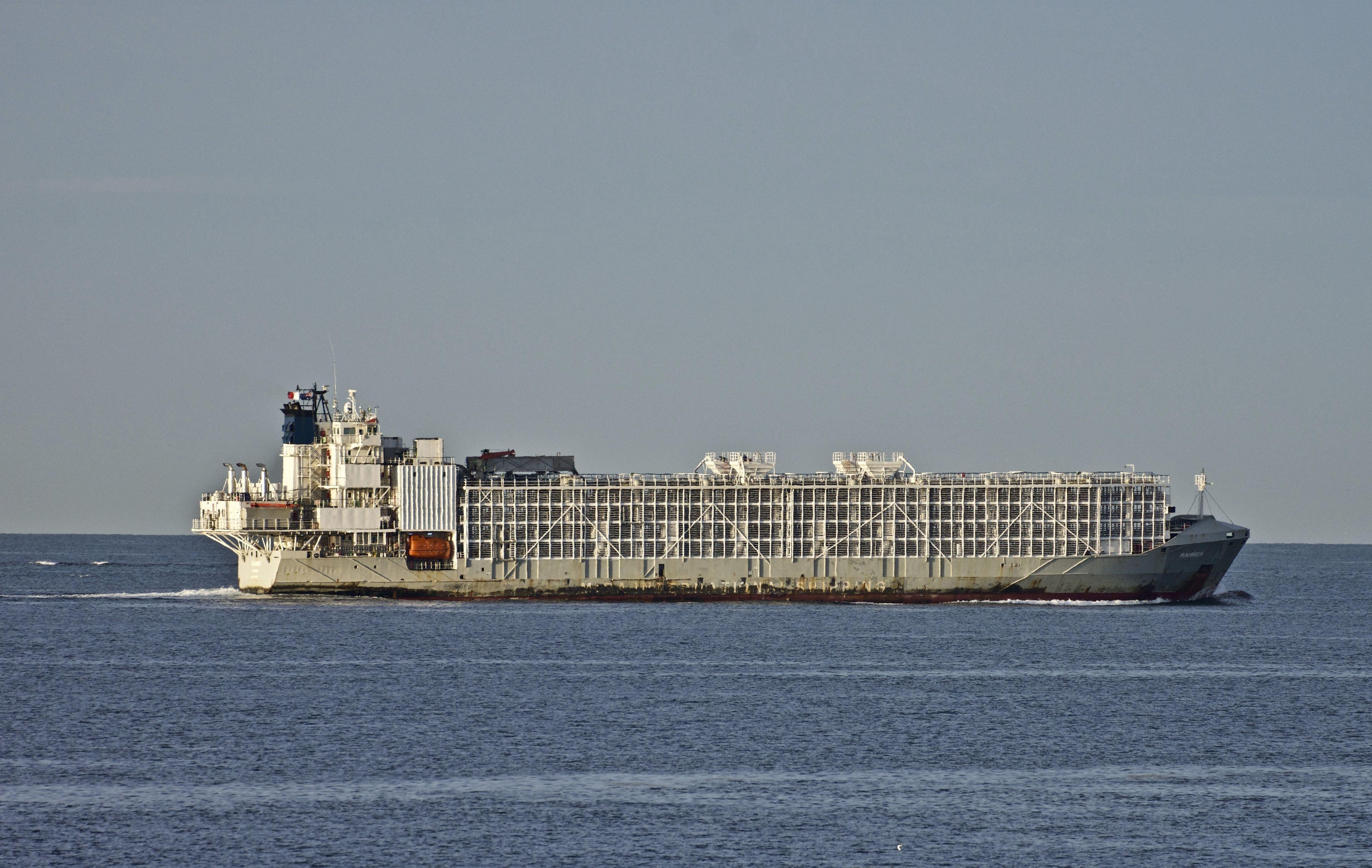 Корабель Gulf Livestock 1 Японія