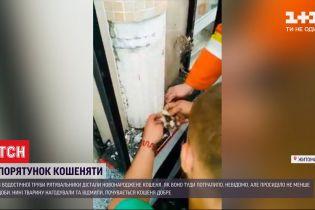 В Житомире бойцы ДСНС разбили бетонную трубу, чтобы спасти котенка