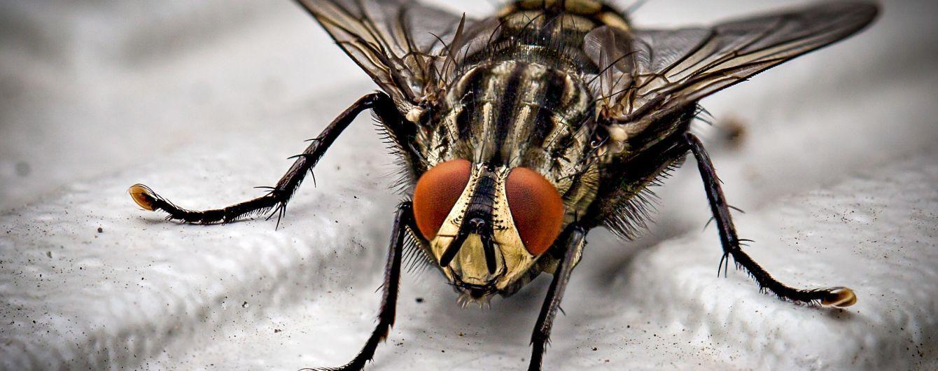 Француз хотів вбити муху та підірвав будинок