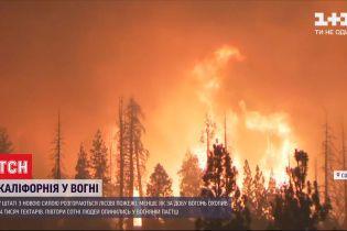 Лесные пожары в Калифорнии: пламя охватило 14 тысяч гектаров меньше чем за сутки