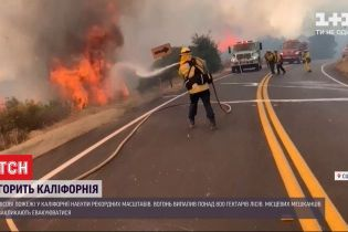 Площадь пожаров в Калифорнии побила исторические показатели