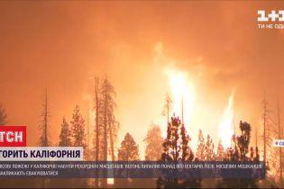 Рекордні лісові пожежі: у Каліфорнії площа загорянь побила історичні показники