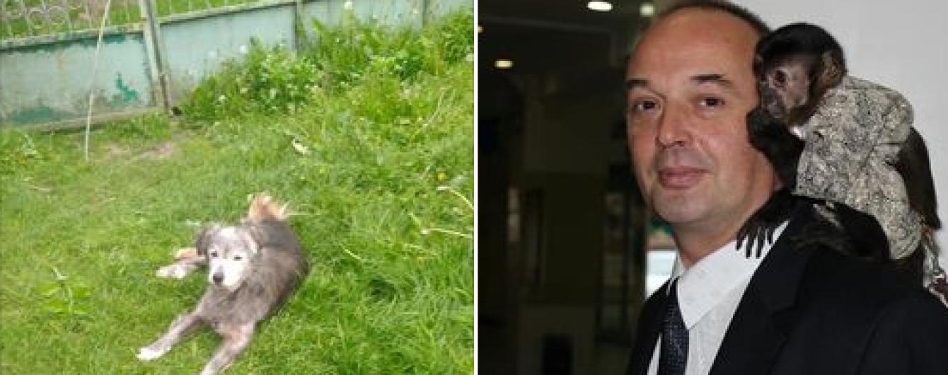 Дочь администратор Львовского цирка обвинила отца в зверском убийстве собаки