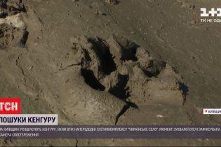 Сумчастий у розшуку: у Київській області кенгуру втік із етнокомплексу