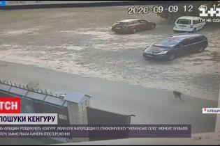 У Київській області тривають пошуки кенгуру, який втік з етнокомплексу