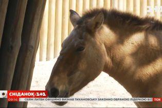 Американским ученым впервые в истории удалось клонировать лошадь Пржевальского