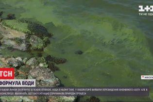 Может стать болотом: экологи бьют тревогу из-за катастрофического загрязнения Бугского лимана