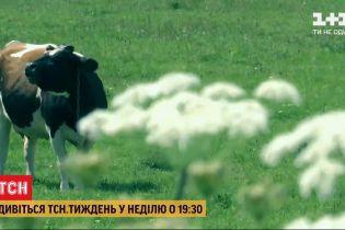 Отруйні джунглі в Україні: ТСН.Тиждень розповість про загрозу від борщівника