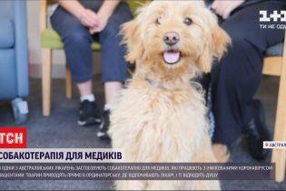 Собакотерапия для медиков: в Австралии придумали способ, как утешить врачей после изнурительной смены