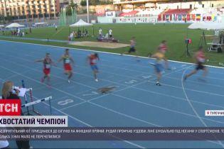 В Турции бездомный кот присоединился к чемпионату по бегу