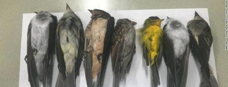 В штате Нью-Мексико загадочно умерли сотни тысяч перелетных птиц