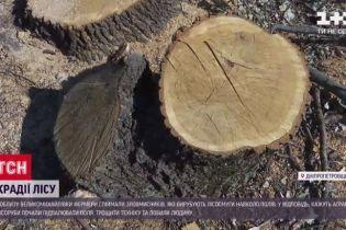 Испорченные посевы и техника: в Днепропетровской области нелегальные лесорубы восстали против фермеров