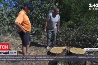 Мисливці за деревиною чи фермери: хто переможе у битві за лісосмуги у Дніпропетровські області