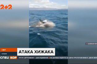 Зграя китів-терористів поблизу берегів Іспанії та Португалії: два місяці косатки таранять човни