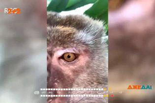 В Малайзии юноша потерял телефон, а на следующий день нашел его в джунглях за домом