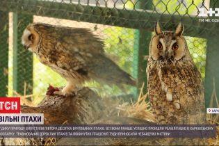 У дику природу випустили 15 птахів, які напередодні були травмовані і виснажені