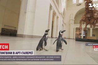 Зірки соцмереж: пінгвіни з чиказького океанаріуму гуляли музеями