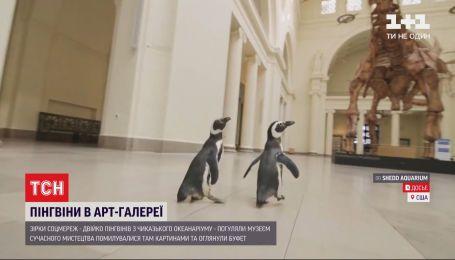 Звезды соцсетей: пингвины с чикагского океанариума гуляли музеями