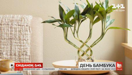 Символ выносливости и удачи: интересные факты о бамбуке