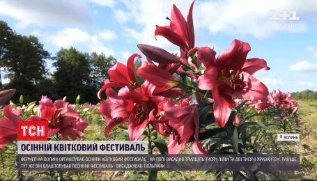 Украинская Голландия: волынский фермер организовал осенний цветочный фестиваль