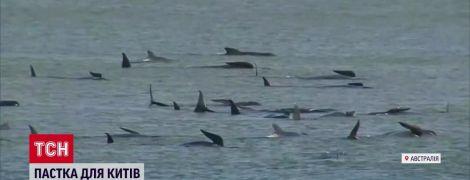 У острова Тасмания на мели застряли почти 300 китов: около 20 погибших