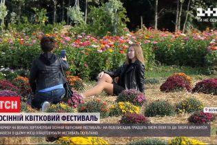 Квітковий фестиваль: волинський фермер посадив понад 30 тисяч квітів на одній ділянці