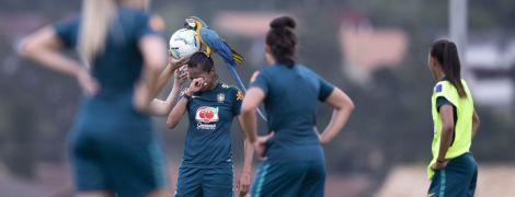 В Бразилии дерзкий попугай сел на голову футболистке и остановил матч (видео)