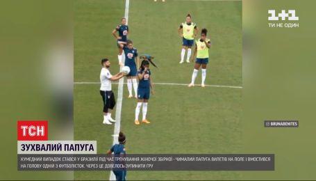 Дерзкий попугай едва не сорвал тренировку бразильских футболисток