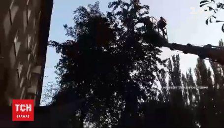 В Никополе из плена нитей на дереве освободили голубя