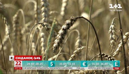 Виробництво агропродукції скоротилося на 10 % – економічні новини