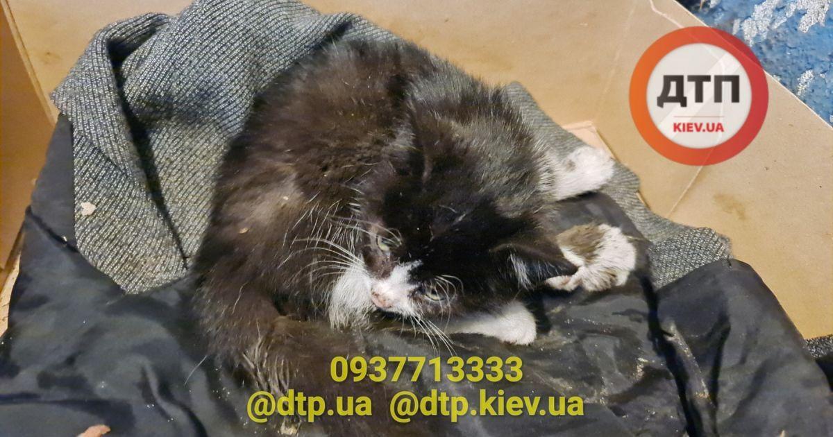 У Києві рятують кошеня, яке переїхав автомобіль
