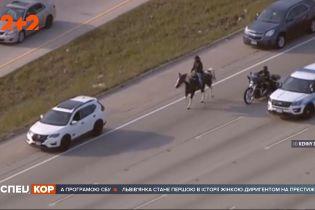 Самотній ковбой на коні у годину пік виїхав на автобан американського Чикаго