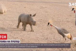 Прудкі та кумедні: зоопарк американського Сан-Дієго показав двох малюків-носорогів
